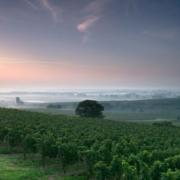 Weingut Dreissigacker Geyersberg