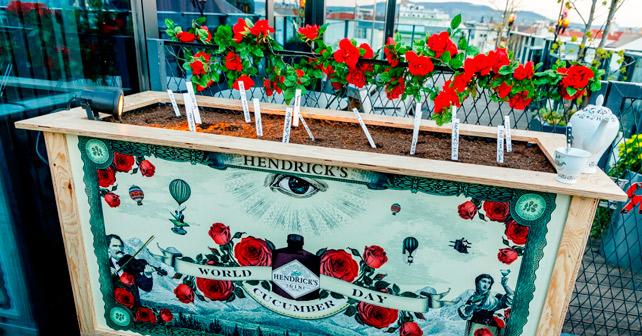 Hendrick's Gin Hochbeet