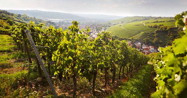 GWF Randersacker Ortschaftsbild
