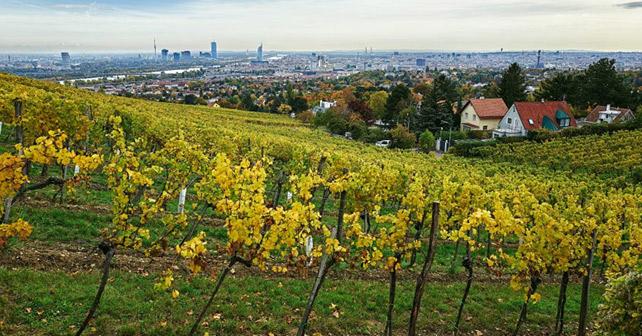 Wiener Weinbau