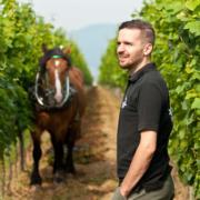 Das Weingut Bergdolt-Reif & Nett