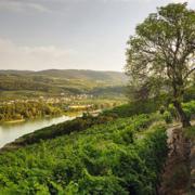Österreich Wein Weinjahrgang 2018