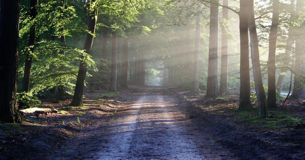Pixabay Natur