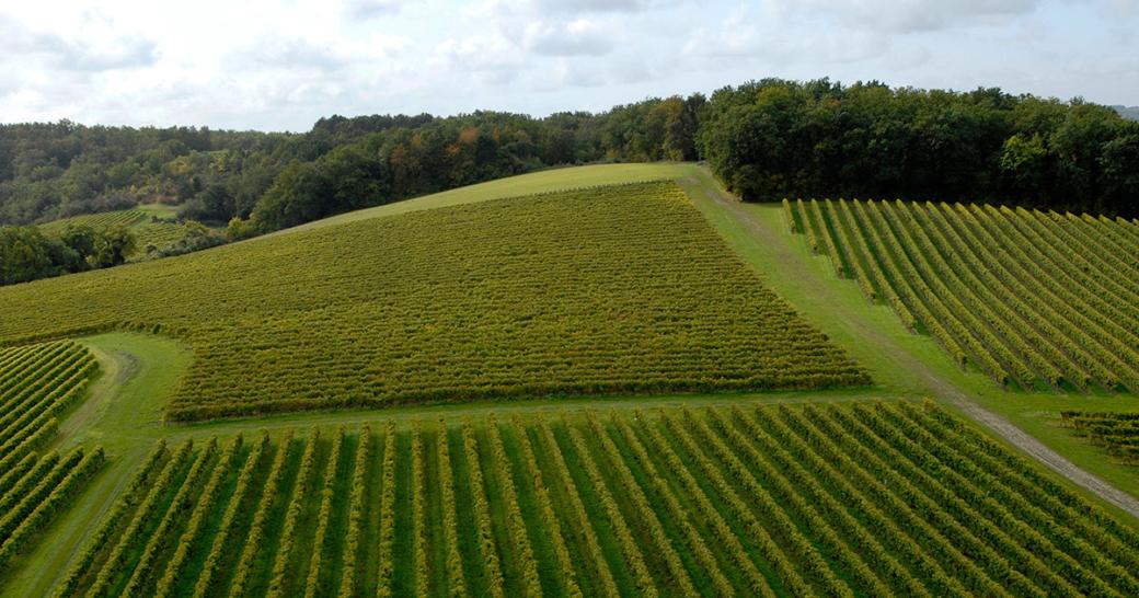 Pernod Ricard Vineyard