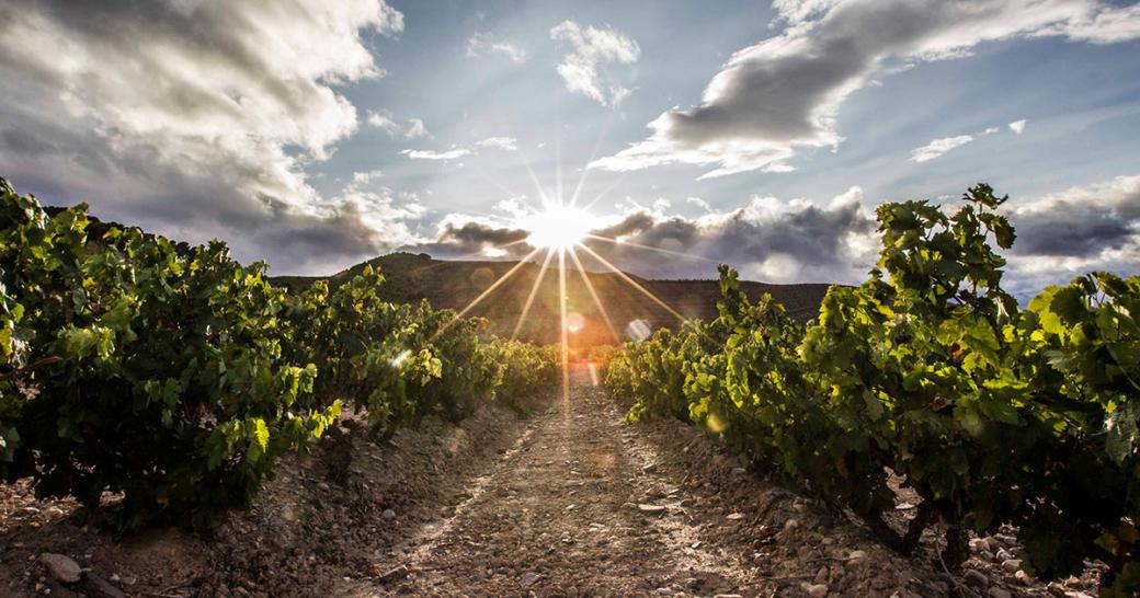 Rioja Wein