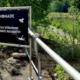 bionade naturgarten