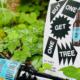 BrewDog Punk IPA Baum