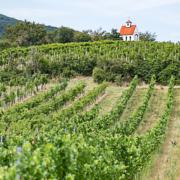 Österreich Wein Hänge